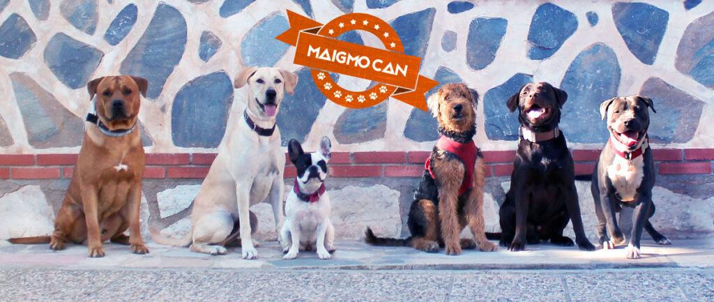 Clases grupales para perros