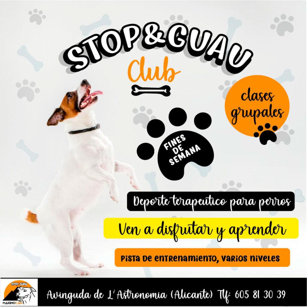 club canino alicante agility obediencia y clases grupales para cachorros